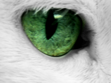 Auge  Katze 2